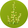 File:FOXGLOVE SMALL.png