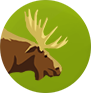 File:MOOSE.png